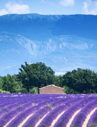 Expertise d'assuré Alpes-de-Haute-Provence